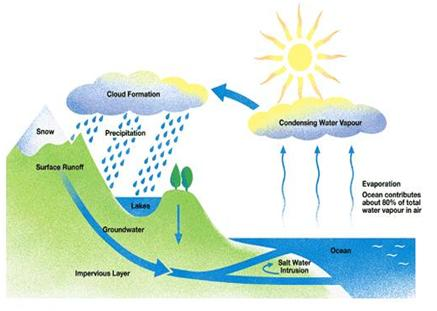 explain the water cycle with the help of a diagram 342n3f0mmclouds are just masses of such water droplets when these droplets of water become too heavy to float in air, they come down as precipitation