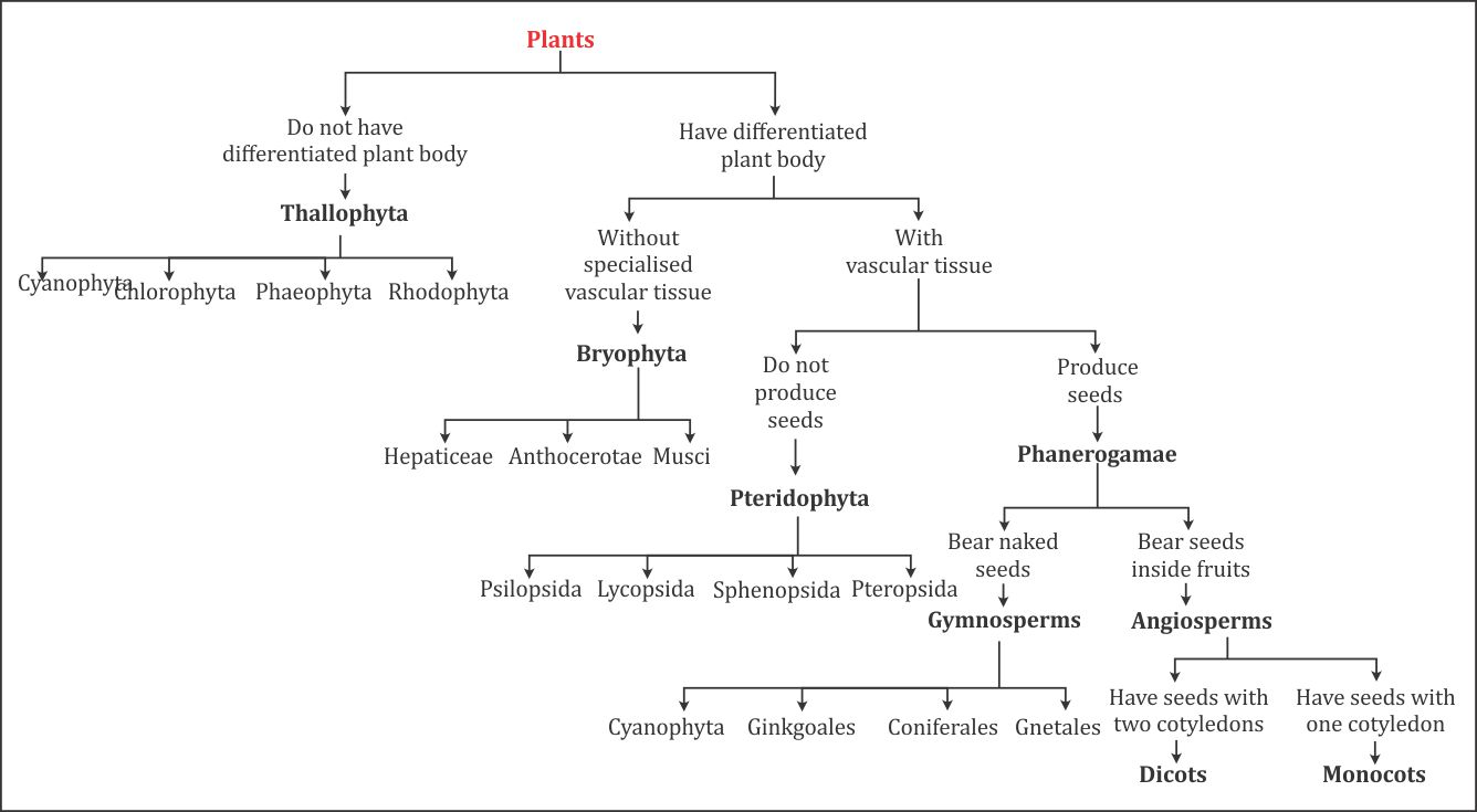Flow chart of plantae 3647 biology topperlearning flow chart of plantae ccuart Gallery
