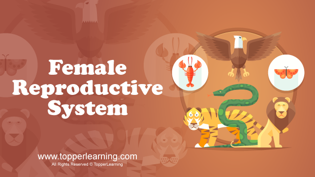 Male and Female Reproductive System ,Male and Female