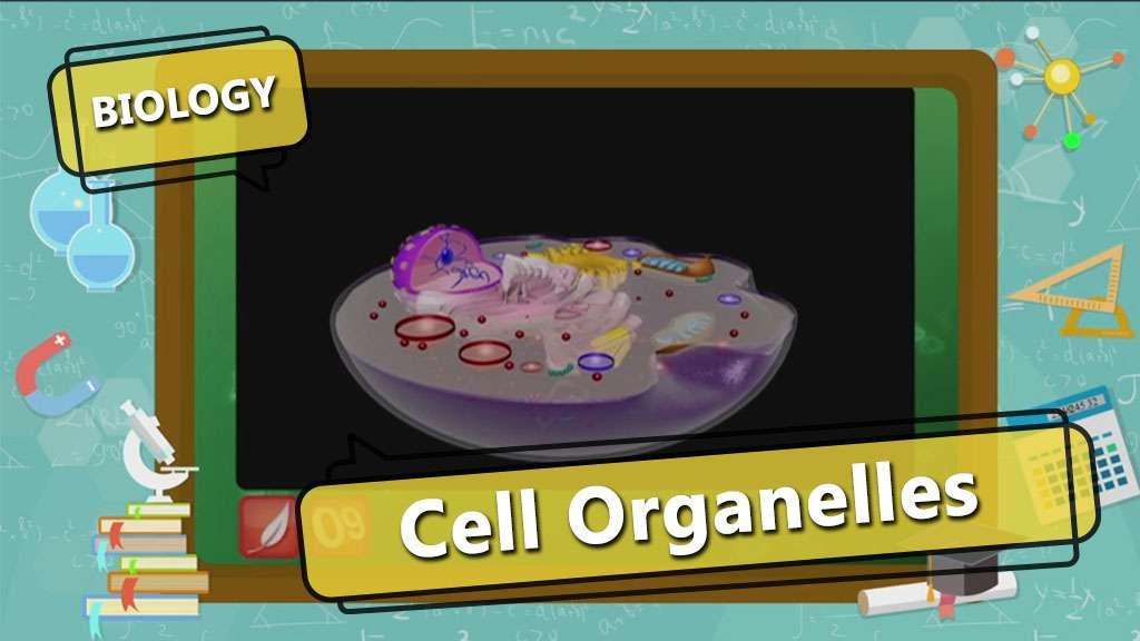 Cell Organelles - 1