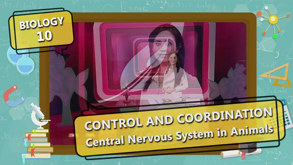 Control and Coordination - Central Nervous System in Humans