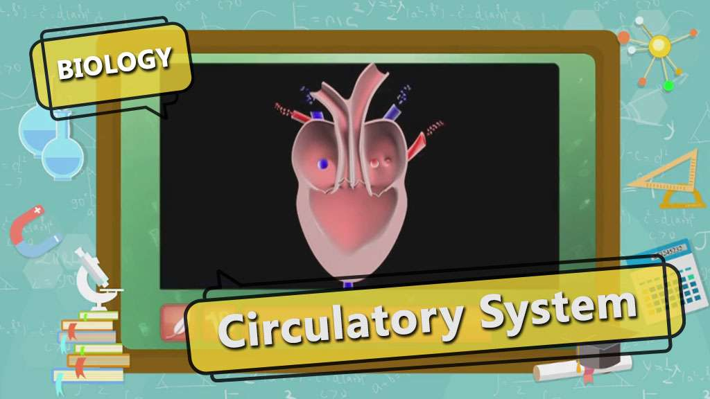 Life Processes - Circulatory System in Humans