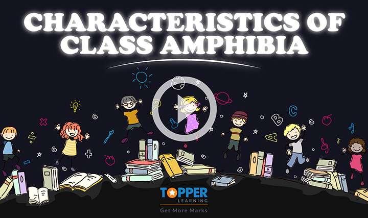 Classification of Animals - Vertebrates