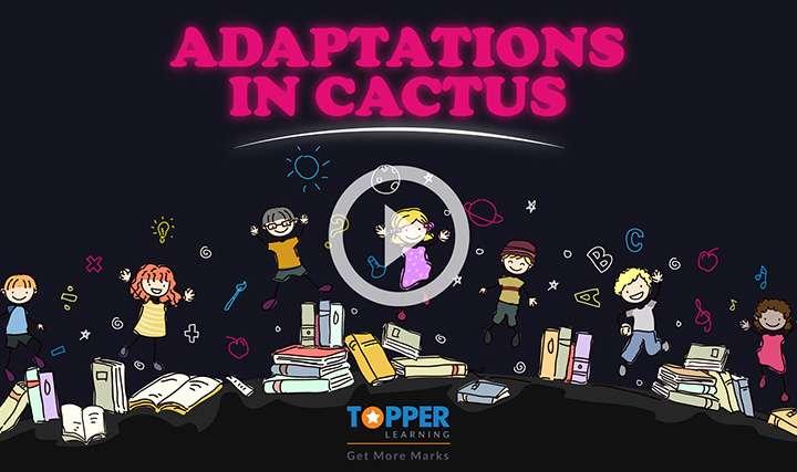 Adaptation - Adaptations in Desert Habitat