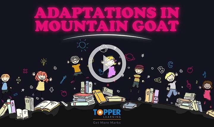 Adaptation - Adaptations in Mountain Habitat