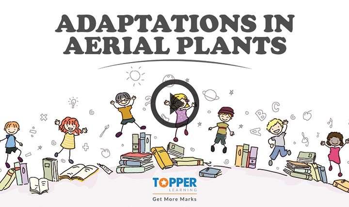 Adaptation - Adaptations in Aerial Habitat