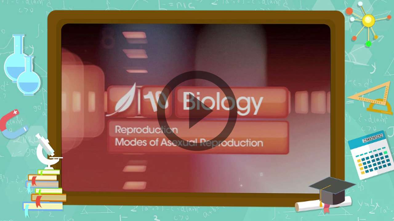 How Do Organisms Reproduce? - Modes of Asexual Reproduction