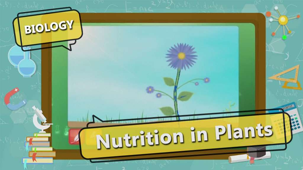 Nutrition In Plants Topic Notes Video Lessons Practice Test For