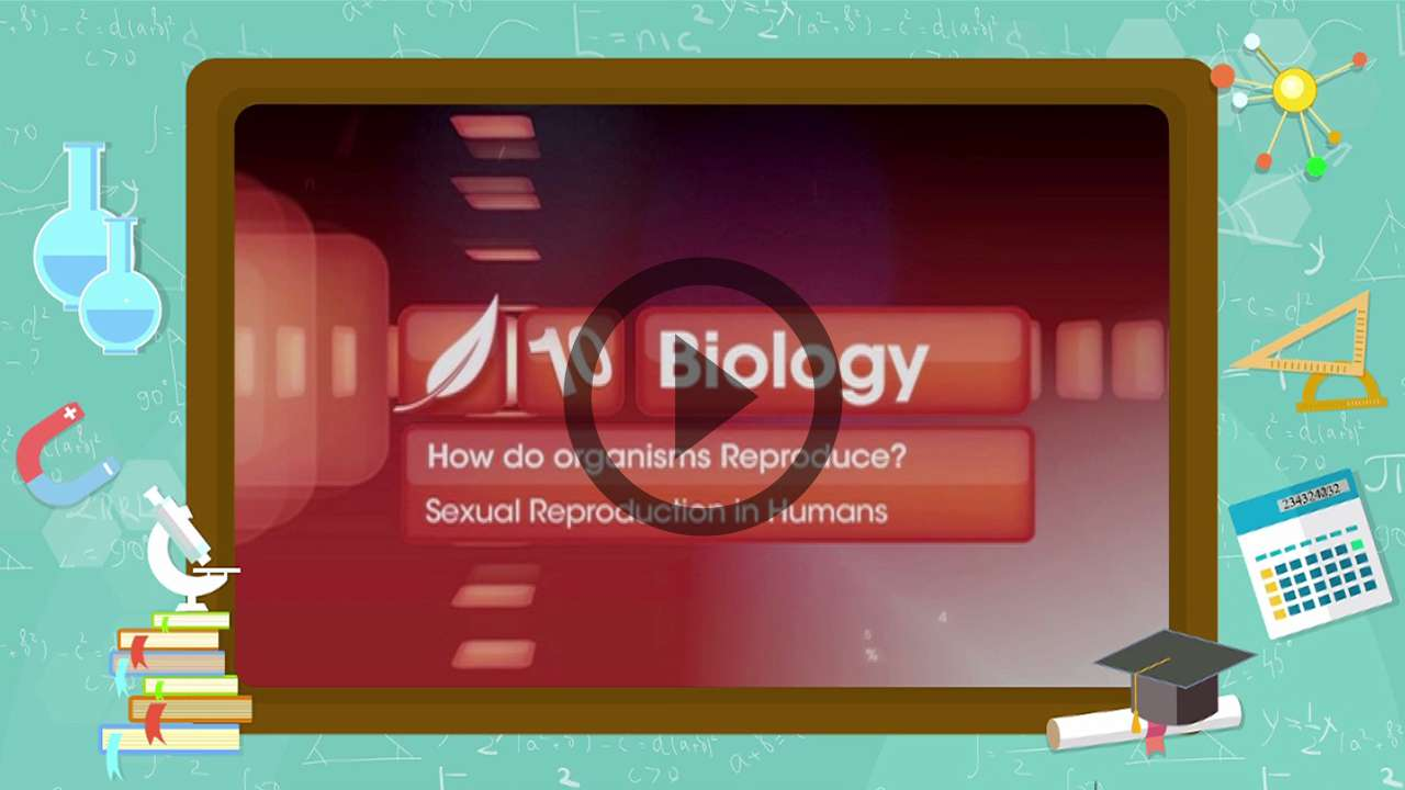 Sexual Reproduction In Humans ,How Do Organisms Reproduce -7248