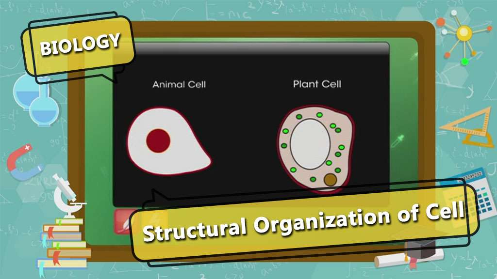Cell - The Fundamental Unit of Life - Cell - Basic Structure