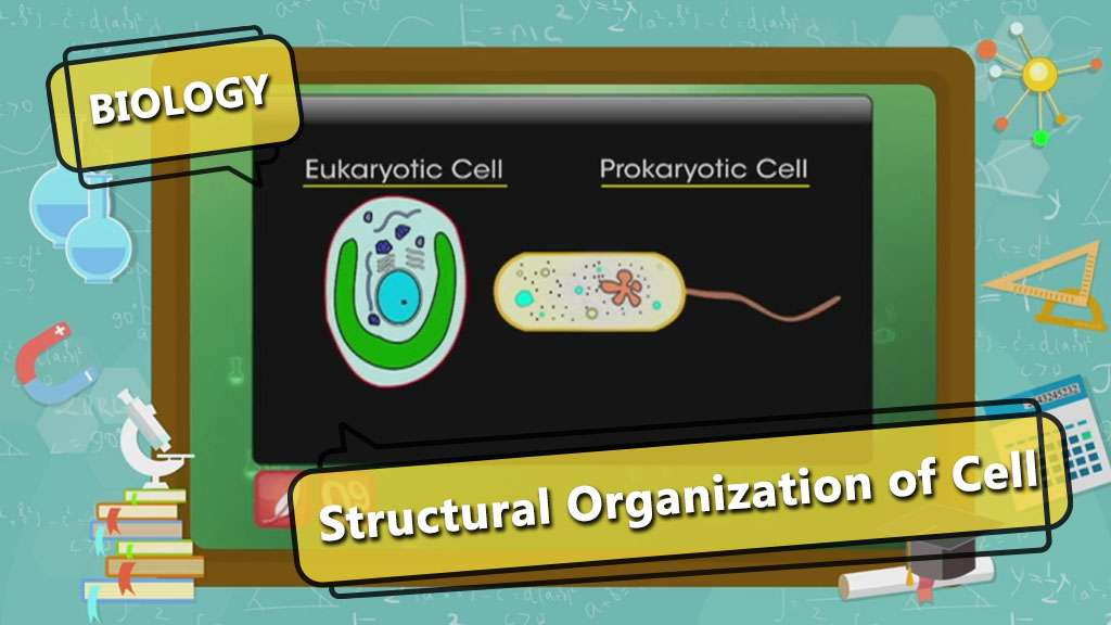 Cell - The Fundamental Unit of Life - Structure of Bacterial Cell