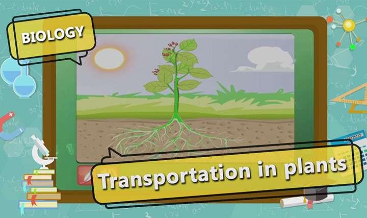 Transport in Organisms - Transport in Plants - Plant 1