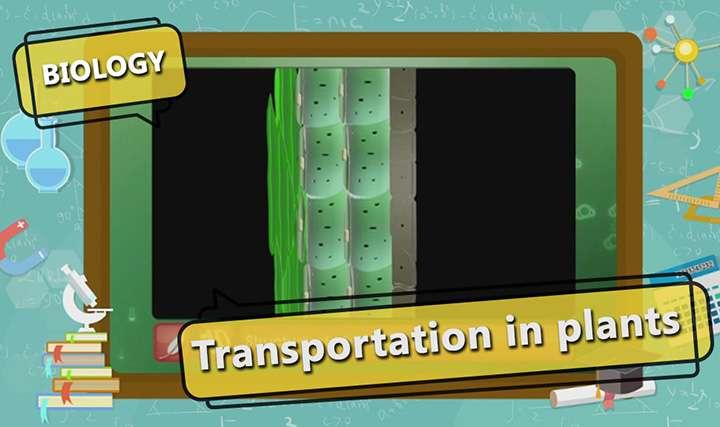 Transport in Organisms - Transport in Plants - Part 2