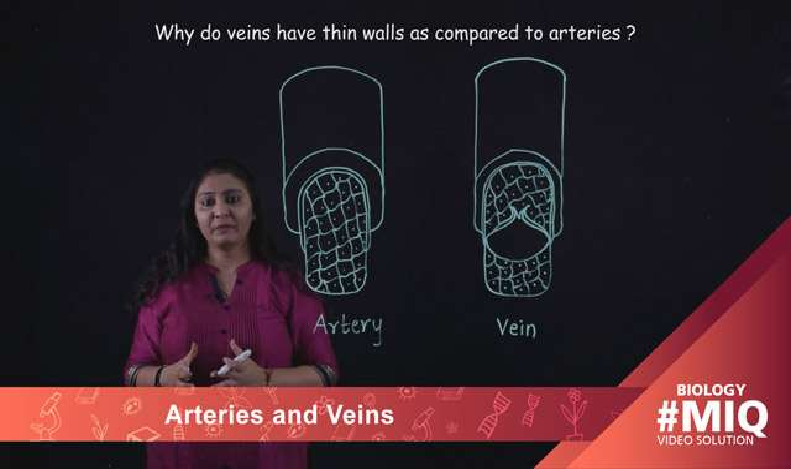 Arteries and Veins -