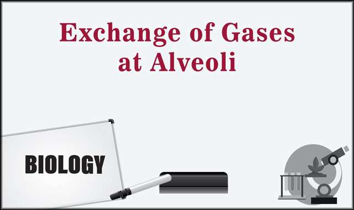 Exchange of Gases at Alveoli -