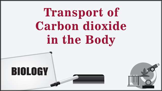 Transport of Carbon dioxide in the Body -