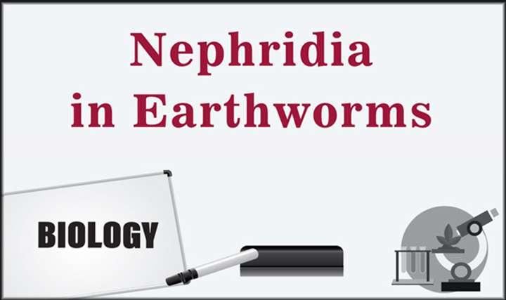 Nephridia in Earthworm -