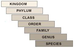 P-s-verma-and-v-k-agarwal Solutions Cbse Class 9 Biology Chapter - Diversity In Living Organisms