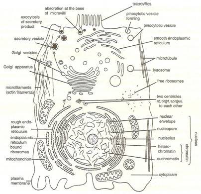 P-s-verma-and-v-k-agarwal Solutions Cbse Class 9 Biology Chapter - The Fundamental Unit Of Life Cell