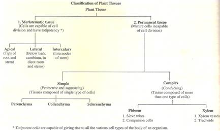 P-s-verma-and-v-k-agarwal Solutions Cbse Class 9 Biology Chapter - Tissues