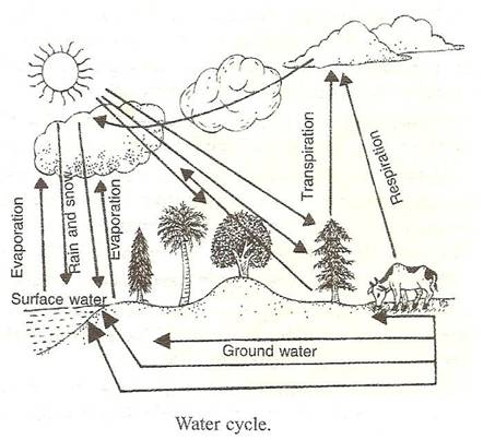 P-s-verma-and-v-k-agarwal Solutions Cbse Class 9 Biology Chapter - Natural Resources