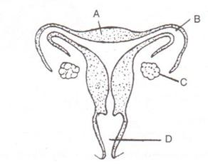 Selina Solutions Icse Class 10 Biology Chapter - The Reproductive System