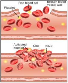 Selina Solutions Icse Class 10 Biology Chapter - The Circulatory System