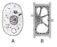 Selina Solutions Icse Class 9 Biology Chapter - Cell The Unit Of Life