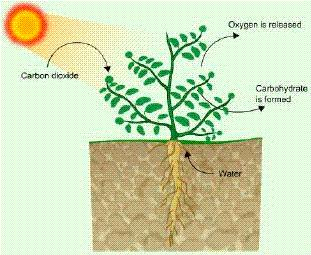 Ncert Solutions Cbse Class 7 Science Chapter - Nutrition In Plants