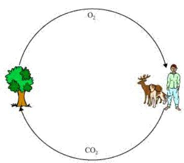 Ncert Solutions Cbse Class 7 Science Chapter - Forests Our Lifeline