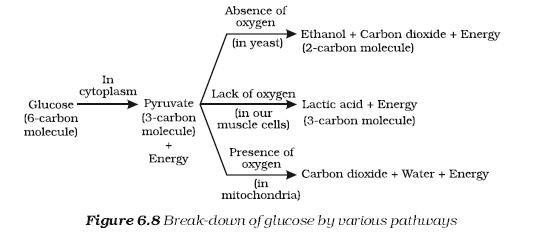 Please Explain This Break Down Biology Topperlearning Com 654zusvv