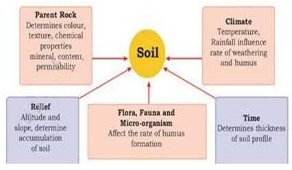 how does topography affect soil formation