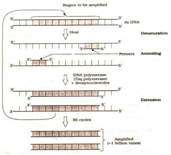 Ncert Solutions Cbse Class 12-science Biology Chapter - Biotechnology Principles And Processes