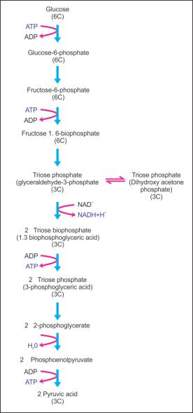 Rq value of tripalmitin