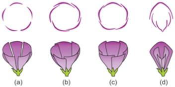 Ncert Solutions Cbse Class 11-science Biology Chapter - Morphology Of Flowering Plants