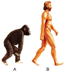 Chapter 14 Human Evolution - Concise Biology Part II