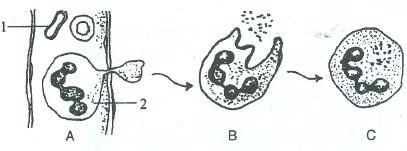 ICSE Books Solution: Selina Concise Biology Class 10 ICSE ...