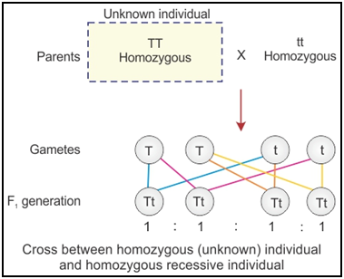 Ncert Solutions Cbse Class 12-science Biology Chapter - Principles Of Inheritance And Variation