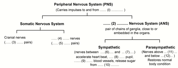 Selina Solutions Icse Class 10 Biology Chapter - The Nervous System